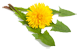 Messages non lus